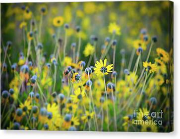 Canvas Print featuring the photograph Yellow Flowers by Kelly Wade