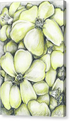 Yellow Flowers Pencil Canvas Print