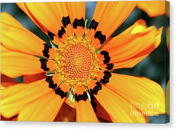 Canvas Print featuring the photograph Yellow Gazania By Kaye Menner by Kaye Menner