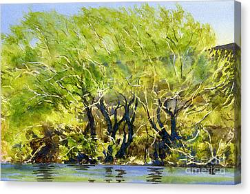Yellow Green Willow Trees Canvas Print