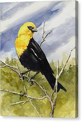 Yellow Beak Canvas Print - Yellow-headed Blackbird by Sam Sidders