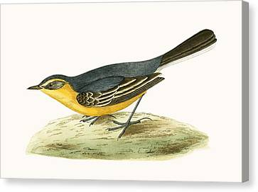 Yellow Headed Wagtail Canvas Print by English School