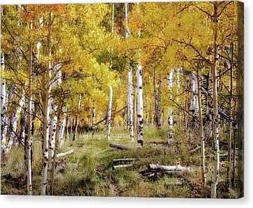 Yellow Heaven Canvas Print by Jim Hill