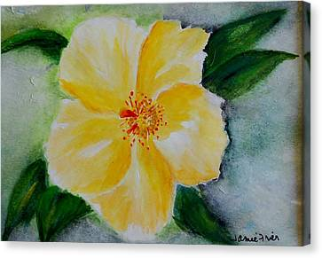 Yellow Hibiscus Canvas Print by Jamie Frier
