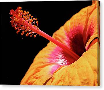 Canvas Print featuring the photograph Yellow Hibiscus by Marie Hicks