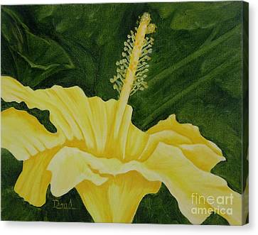 Yellow Hibiscus Opening To The Morning Canvas Print by Mary Deal