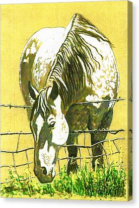 Yellow Horse Canvas Print