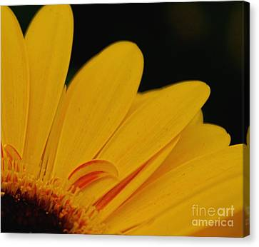 Yellow II Canvas Print by Louise Fahy