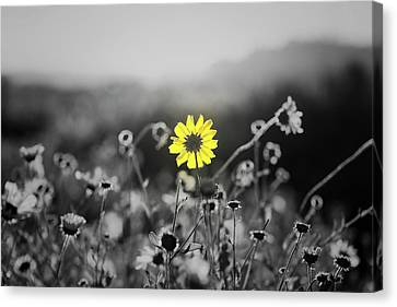 Yellow Is The Color Canvas Print by Joseph S Giacalone