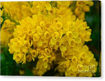 Yellow Is The Joy Of Spring Canvas Print by Debra Banks
