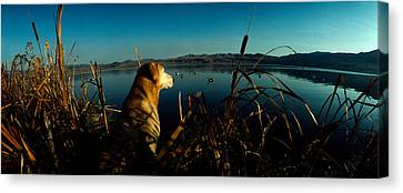 Yellow Labrador Retriever Canvas Print by Panoramic Images