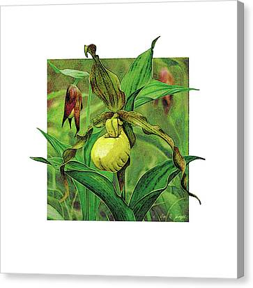 Yellow Lady Slipper Canvas Print by JQ Licensing