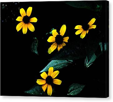 Canvas Print featuring the photograph Yellow by Laura DAddona