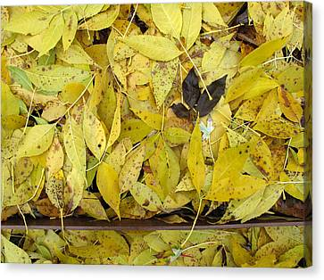 Yellow Leaves On The Ground  Canvas Print by Lyle Crump