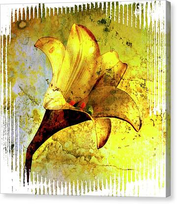 Yellow Lily Canvas Print by Bernard Jaubert