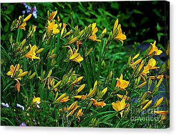 Canvas Print featuring the photograph Yellow Lily Flowers by Susanne Van Hulst