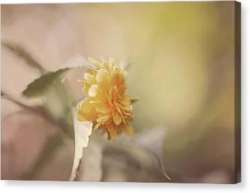 Yellow Love Canvas Print by Cindy Grundsten