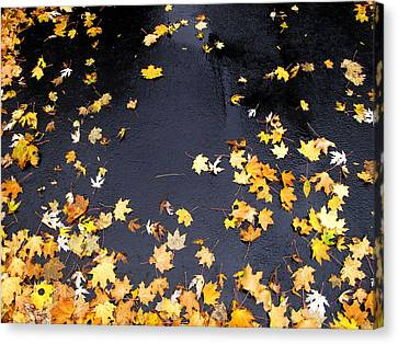 Yellow Maple Leaves On Pavement  Canvas Print by Lyle Crump