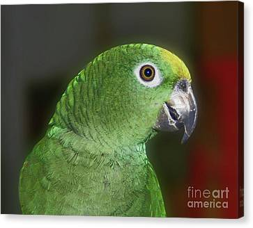 Yellow Naped Amazon Parrot Canvas Print by Smilin Eyes  Treasures