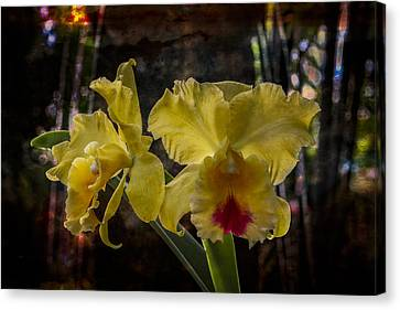 Yellow Orchids Canvas Print by Debra and Dave Vanderlaan