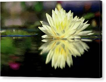Yellow Painted Waterlily  Canvas Print