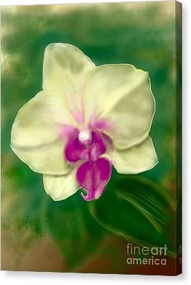 Yellow Phalenopsis Canvas Print