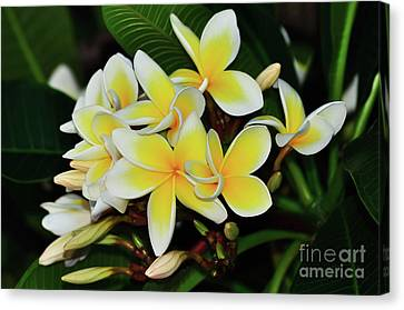 Canvas Print featuring the photograph Yellow Plumeria By Kaye Menner by Kaye Menner