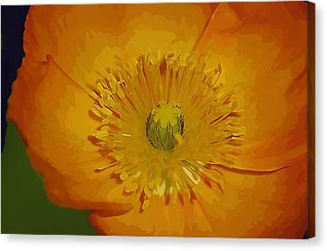 Canvas Print featuring the photograph Yellow Poppy by Donna Bentley