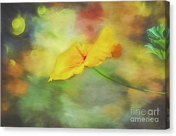 Creative Manipulation Canvas Print - Yellow Poppy by Jutta Maria Pusl