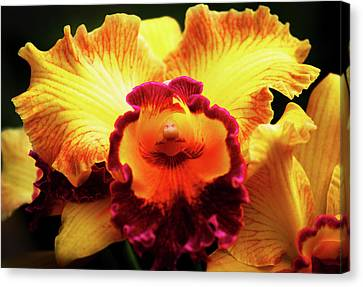 Canvas Print featuring the photograph Yellow-purple Orchid by Anthony Jones
