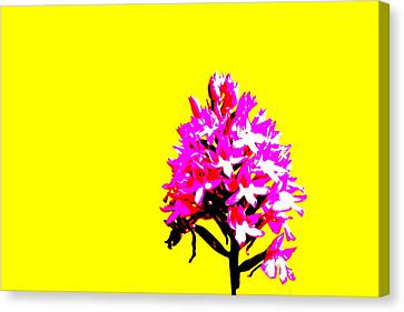 Yellow Pyramid Orchid Canvas Print by Richard Patmore