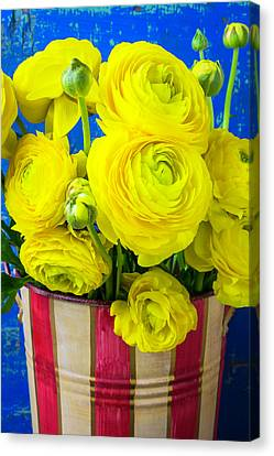 Yellow Ranunculus In Striped Can Canvas Print by Garry Gay