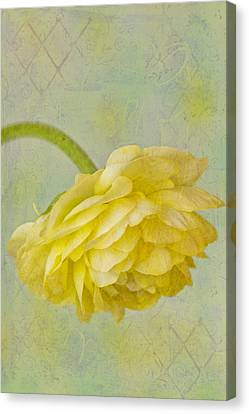 Yellow Ranunculus Macro Canvas Print by Sandra Foster