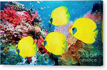 Clown Fish Canvas Print - Yellow Reef Fish II by Garland Johnson