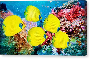 Clown Fish Canvas Print - Yellow Reef Fish IIi. Canvas Painting by Garland Johnson