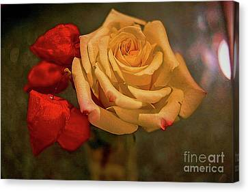 Canvas Print featuring the photograph Yellow Rose And Chinese Lanterns by Diana Mary Sharpton