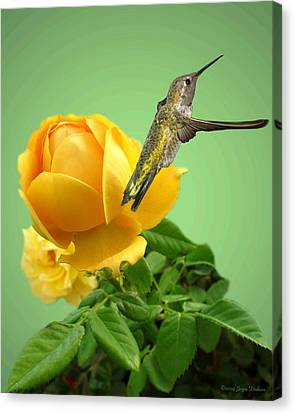 Yellow Rose And Hummingbird 2 Canvas Print