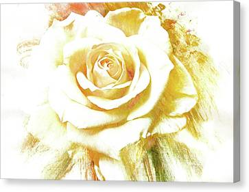 Canvas Print featuring the photograph yellow Rose by Athala Carole Bruckner