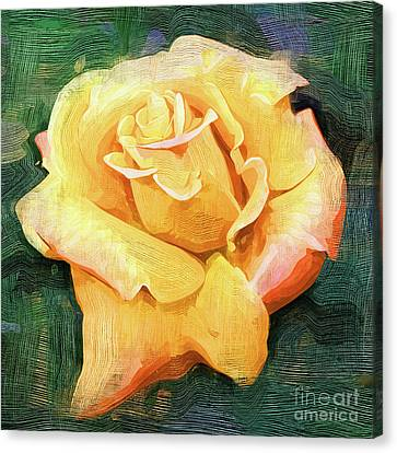 Yellow Rose Bloom In Oil Canvas Print by Kirt Tisdale