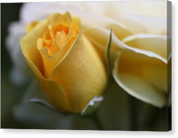 Yellow Rose Bud Flower Canvas Print by Jennie Marie Schell