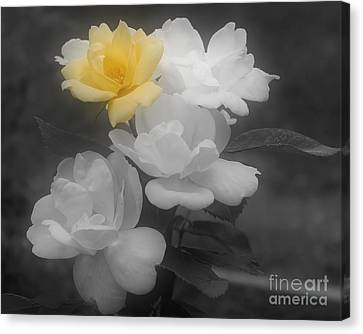 Yellow Rose Cluster Partial Color Canvas Print by Smilin Eyes  Treasures