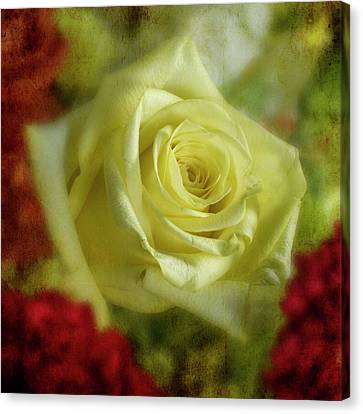 Yellow Rose Canvas Print by Garry McMichael