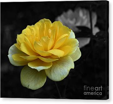 Yellow Rose In Bloom Canvas Print by Smilin Eyes  Treasures