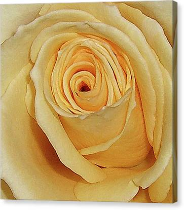 Canvas Print featuring the photograph Yellow Rose by Merton Allen