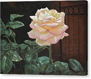 Yellow Rose Of Texas Canvas Print by Christopher Reid