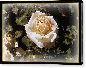 Yellow Rose Of Texas Canvas Print by Trina Prenzi