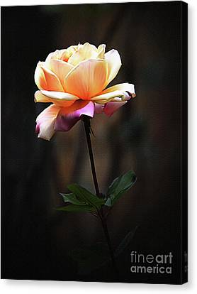 Yellow Rose Painting  Canvas Print by Gull G