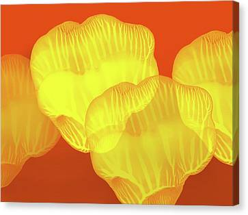 Yellow Rose Petals Falling In The Garden At Sunset  Canvas Print by Amy Vangsgard