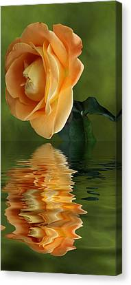 Yellow Rose Canvas Print by Rick Friedle
