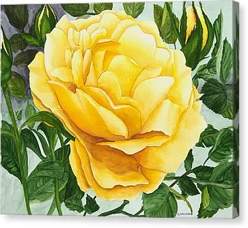 Yellow Rose Canvas Print by Robert Thomaston